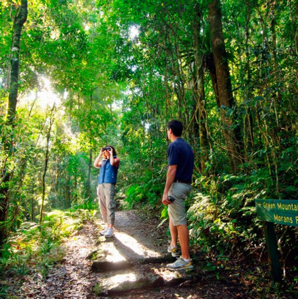 a couple taking pictures in a forest in lamington park