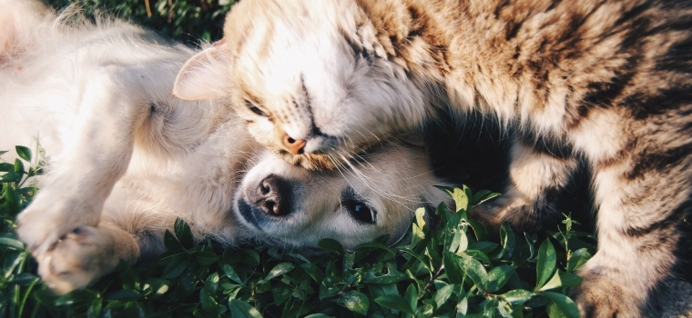Choosing the Right Pet for your Home