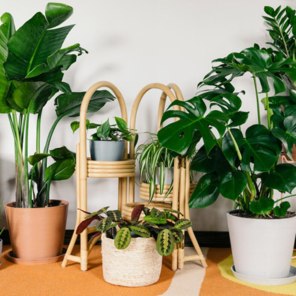 assortment of potted plants
